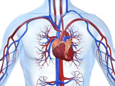 Treatment for Vascular Disease