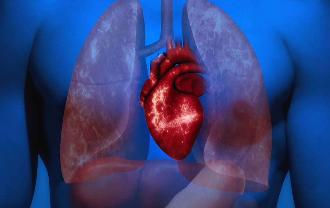 Human Heart-1